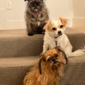 Beverly's three dogs