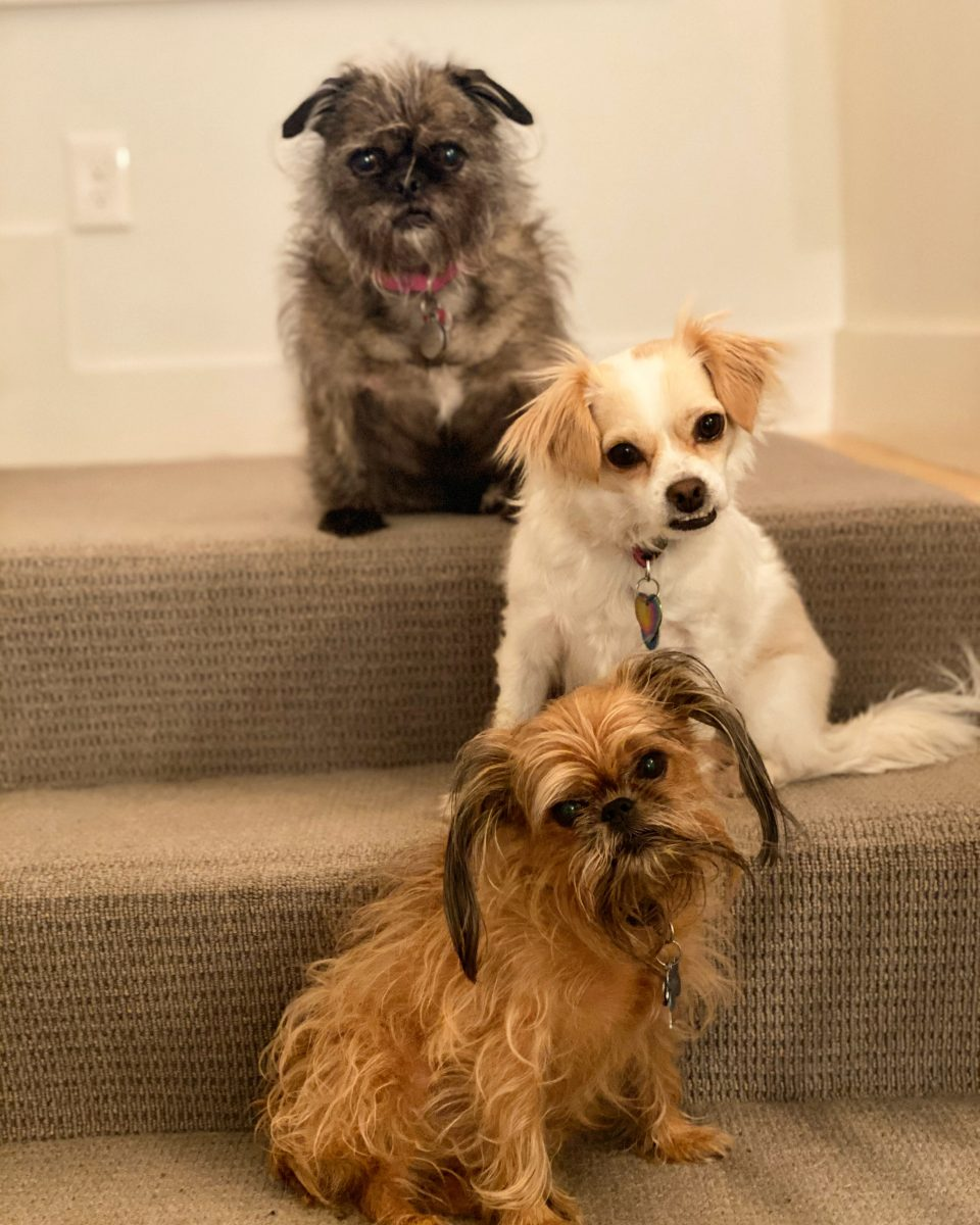 Beverly's three dogs